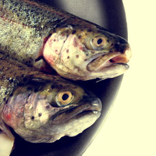 natural testosterone boosters -fish